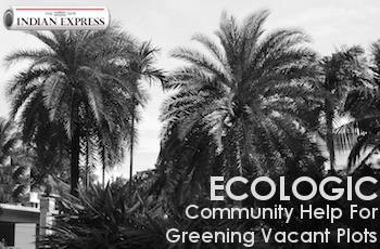 ECOLOGIC: Community Help for Greening Vacant Plots