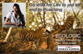 ECOLOGIC: Go wild for life.. End to Poaching