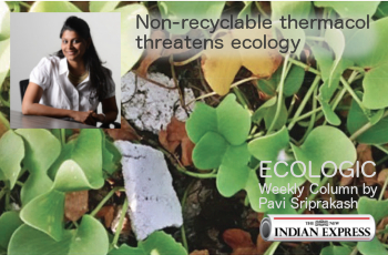 ECOLOGIC: Non-recyclable thermacol threatens ecology
