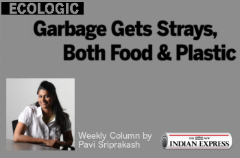 ECOLOGIC: Garbage gets strays, both food and plastic