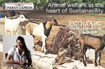 ECOLOGIC: Animal Welfare at the heart of Sustainability