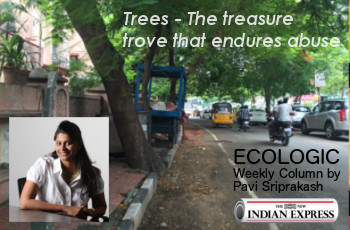 ECOLOGIC: Treasure Trove – Trees