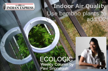 ECOLOGIC: Use Bamboo Plants to add Oxygen