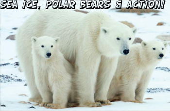 ECOLOGIC: Sea ice, polar bears & action!