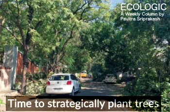 ECOLOGIC: Time to strategically plant trees!