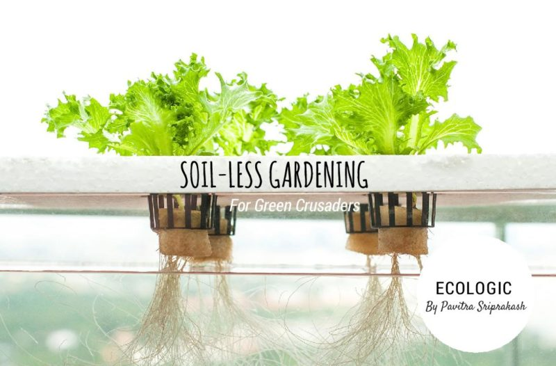 ECOLOGIC : Soil-less gardening for green crusaders