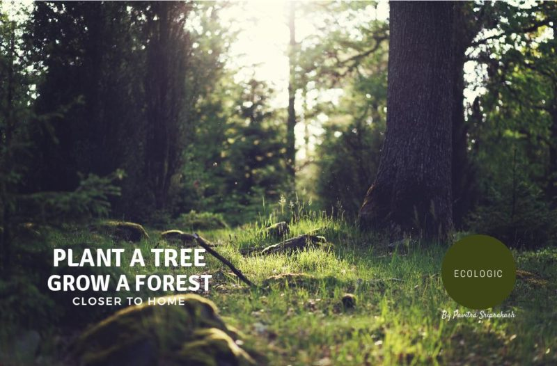 ECOLOGIC : Plant a tree, grow a forest closer to home