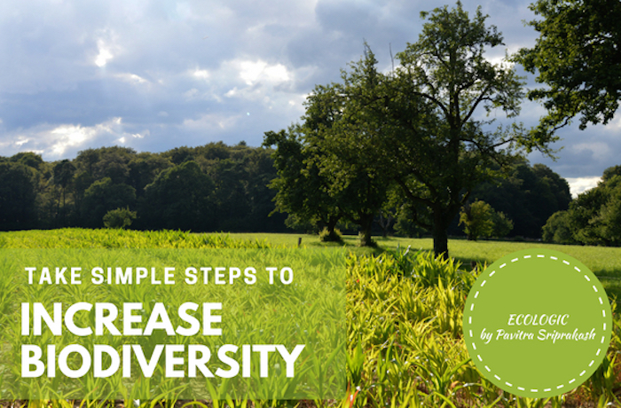 ECOLOGIC: Simple Steps to Increase Biodiversity