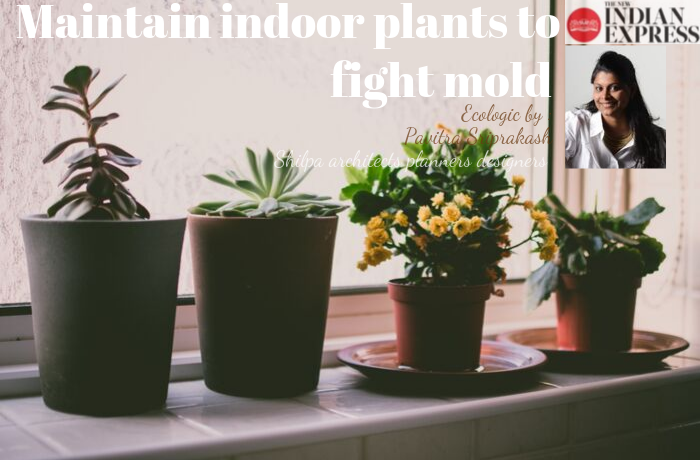 ECOLOGIC : Maintain indoor plants to fight mold